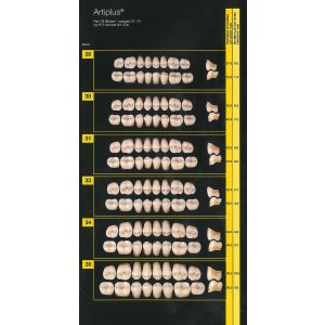 Artiplus kindtand 1x8 Biodent Farver
