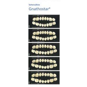 Gnathostar kindtand 1x6 A-D Farver + 2 Bleach farver